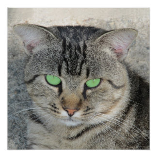 Green-eyed Tabby Cat Poster