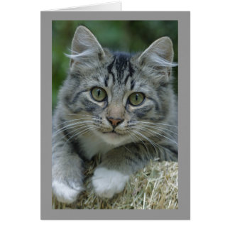 Green-eyed Tabby Cat with White Paws Card