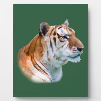 Green-eyed Tiger in Profile Plaque