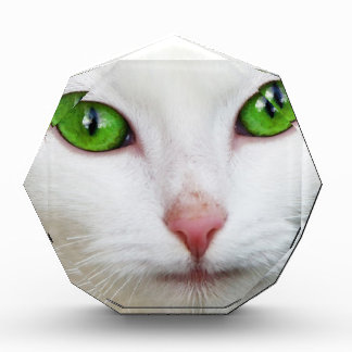Green Eyed White Cat Acrylic Award