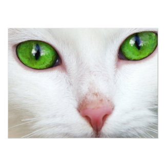 Green Eyed White Cat Card
