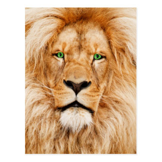 Green Eyes Lions face Post Cards