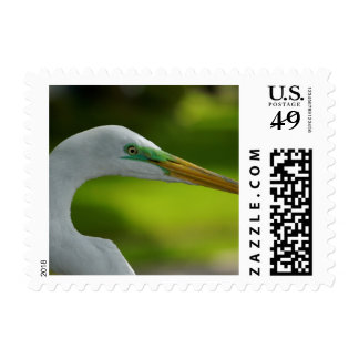 Green Eyes Stamps