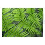 Green Fern Card