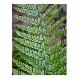 Green fern leaf pattern postcard