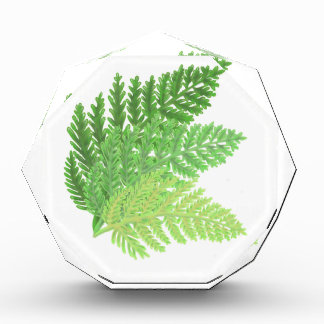 Green Ferns Award