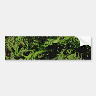 Green Ferns Bumper Sticker
