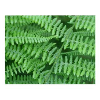 Green Ferns Nature Photography Postcard