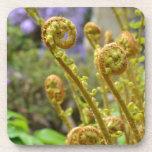 Green fiddlehead fern leaves drink coasters