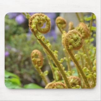 Green fiddlehead fern leaves mouse pad