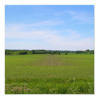 Green field blue sky crops farmland art photograph card