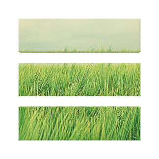 Green field canvas print