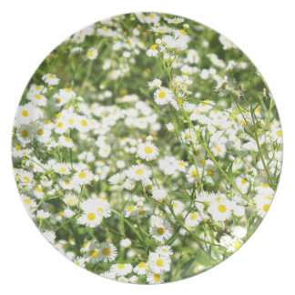 Green field with white daisies closeup plate