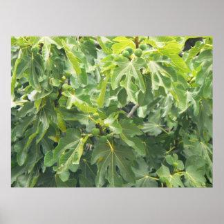 Green Figs Print