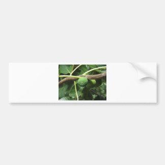 Green figs ripening on a fig tree bumper sticker