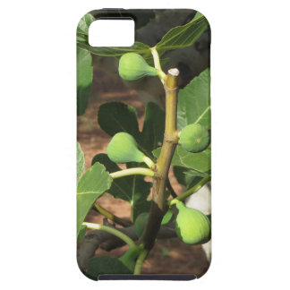 Green figs ripening on a fig tree iPhone SE/5/5s case