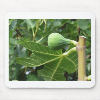 Green figs ripening on a fig tree mouse pad