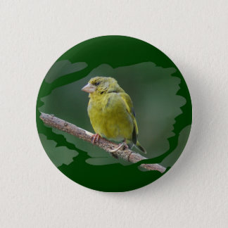 Green Finch - green finch - Verdier photo JL Button