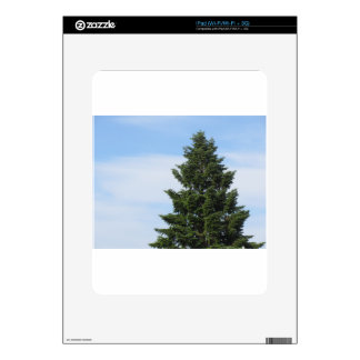 Green fir tree against a clear sky decal for the iPad