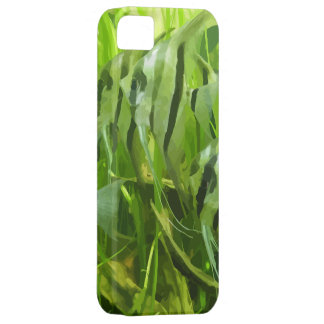 Green Fish iPhone 5 Cover