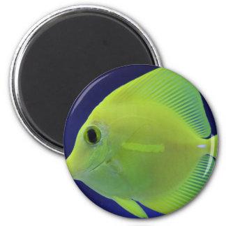GREEN FISH MAGNET