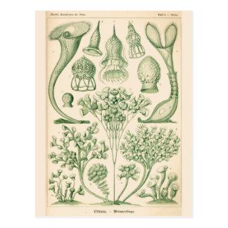 Green Flora Biological Illustration Postcard