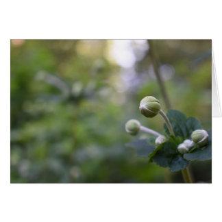 Green Flower Bud Garden Nature Photography Floral Card