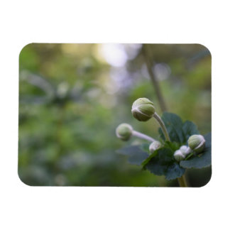 Green Flower Bud Garden Nature Photography Floral Magnet