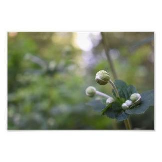 Green Flower Bud Garden Nature Photography Floral Photo Print