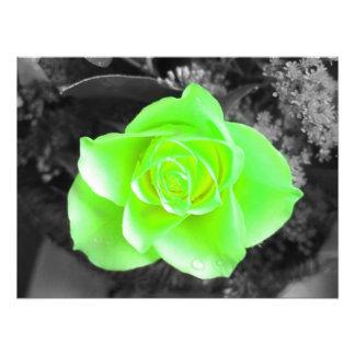 Green Flower Head with Dark Background (1) Photo Print