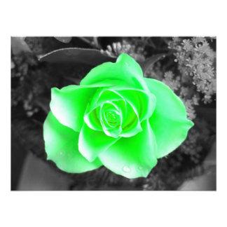 Green Flower Head with Dark Background (2) Photo Print