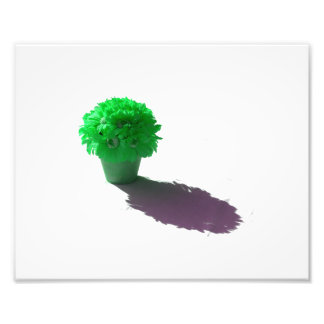 Green Flowers White Bucket and Shadow Photo Print