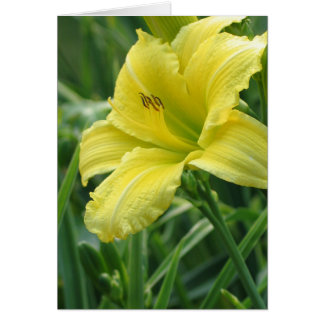 Green Flutter Daylily Greeting Card