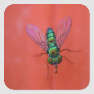 Green Fly on Orange Flower Macro Photo Square Sticker