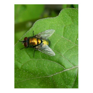 green fly postcard