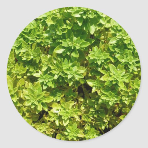 green foliage background plant classic round sticker