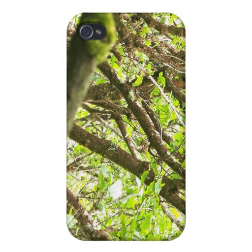 Green Forest iPhone 4/4S Cover