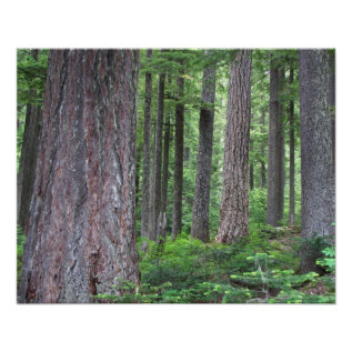Green Forest Nature Poster at Zazzle