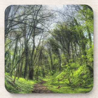 Green Forest Path HDR Drink Coasters