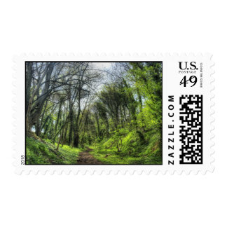 Green Forest Path HDR Postage Stamps