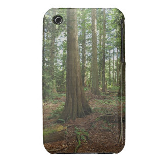 Green Forest Woodlands Tree Nature Photo iPhone 3 Cover