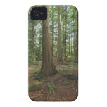 Green Forest Woodlands Tree Nature Photo Case-Mate iPhone 4 Cases