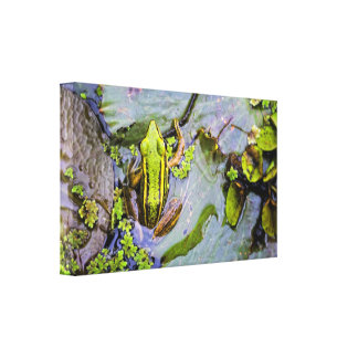 Green Frog (1) Stretched Canvas Prints