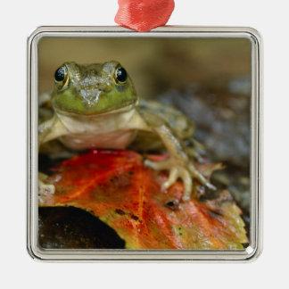 Green frog along the Buffalo Creek bank, Wet Metal Ornament