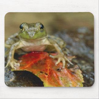 Green frog along the Buffalo Creek bank, Wet Mouse Pad