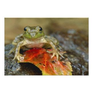 Green frog along the Buffalo Creek bank, Wet Photo Art