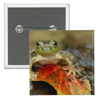 Green frog along the Buffalo Creek bank, Wet Pinback Button