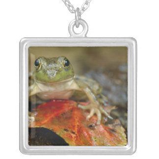 Green frog along the Buffalo Creek bank, Wet Silver Plated Necklace