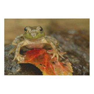 Green frog along the Buffalo Creek bank, Wet Wood Wall Art