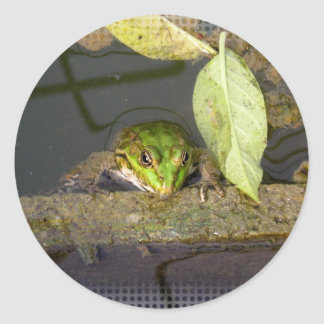 Green Frog Classic Round Sticker